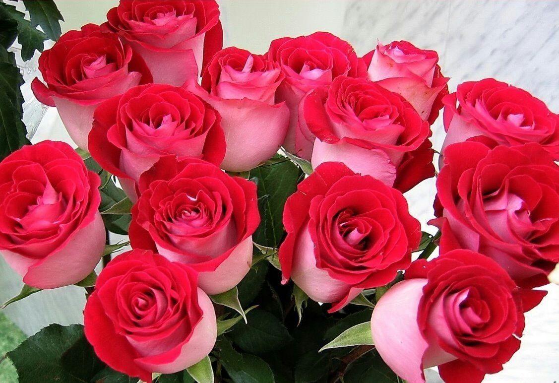 Полки для цветов своими руками 230 12