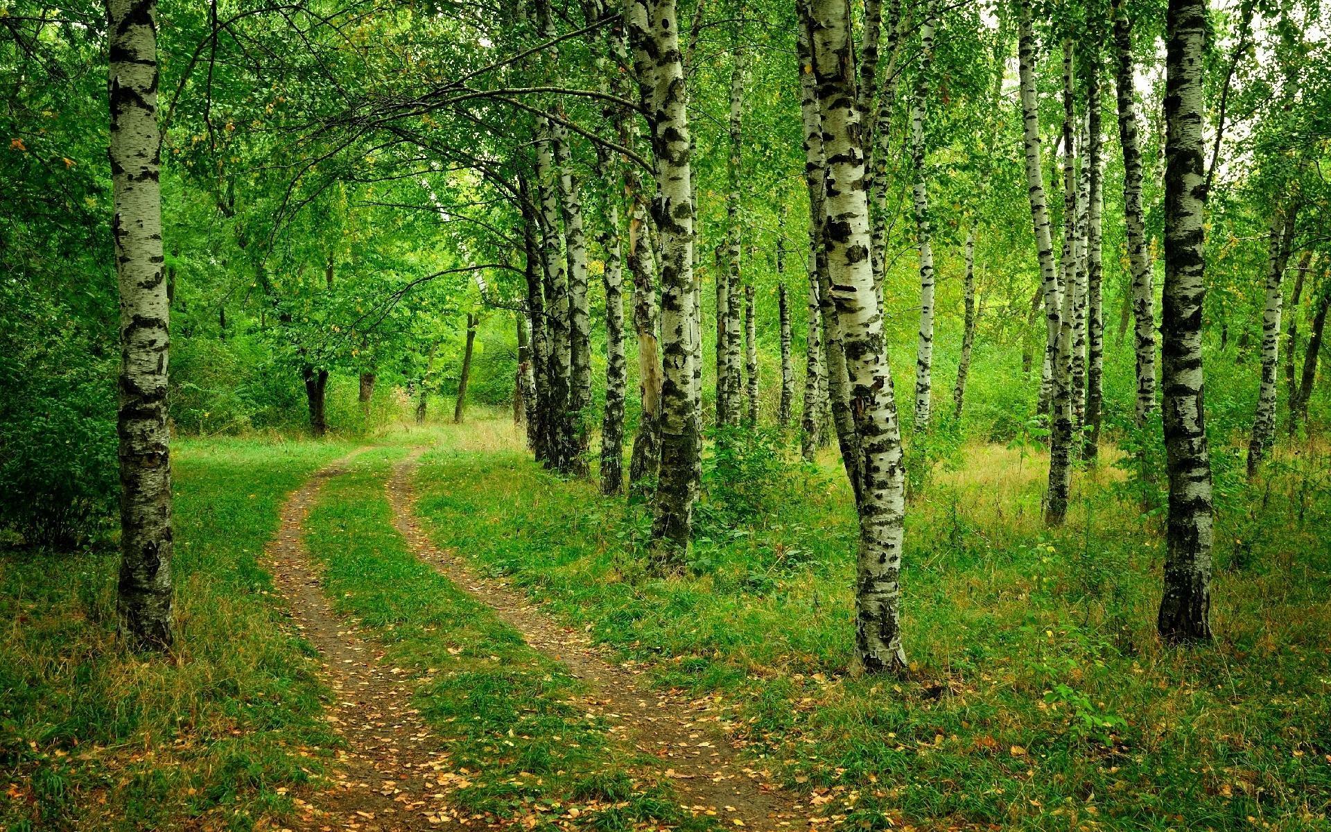 Обои на рабочий стол русский лес летом