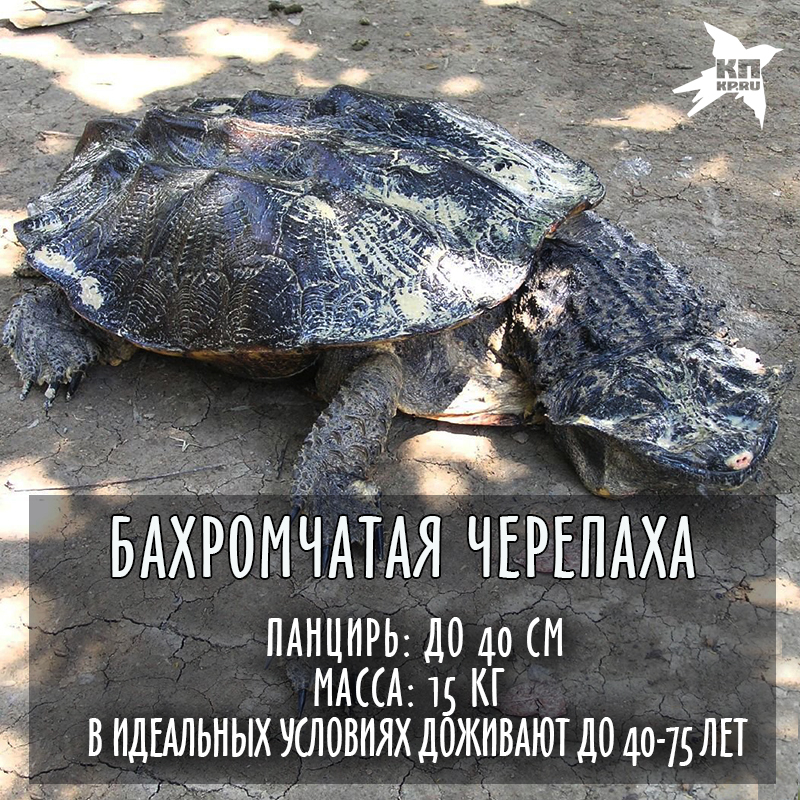 Картинки всемирный день черепахи