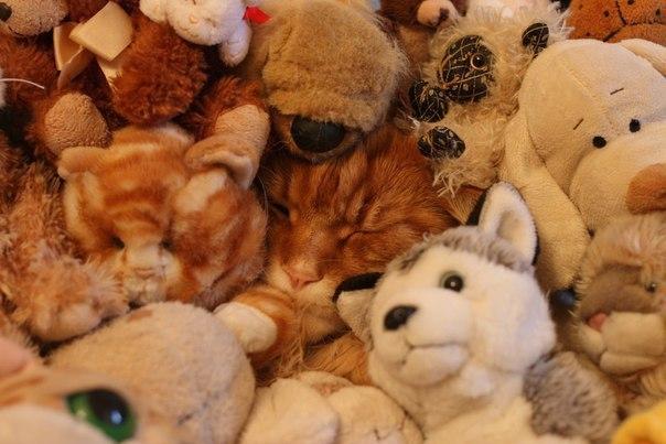 Спят усталые игрушки картинки прикольные