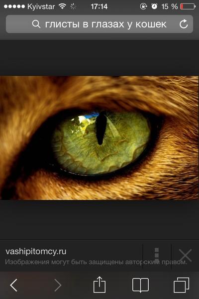 глисты в глазах у человека симптомы лечение